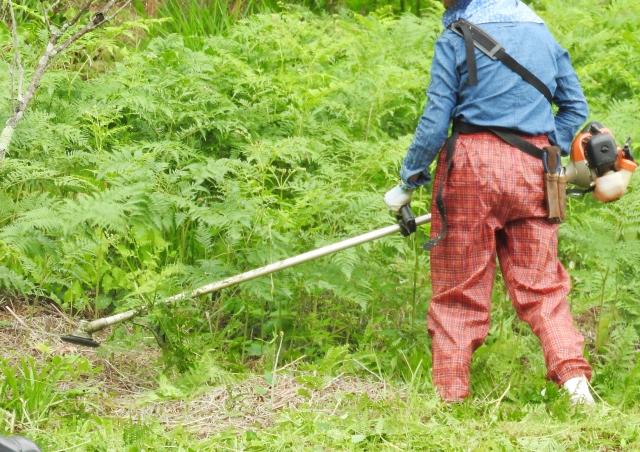 佐賀市で草刈りにかかる料金相場は?追加料金や業者選びのコツまで解説