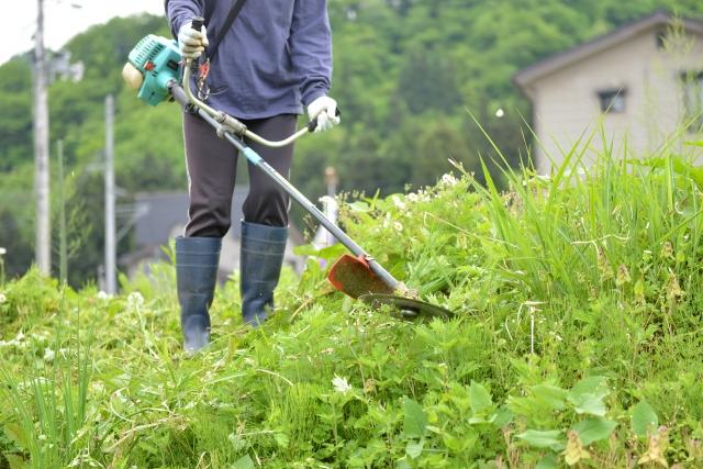 佐賀市で草刈りに最適な年3回の時期~楽に草刈りを終えるコツまで徹底解説