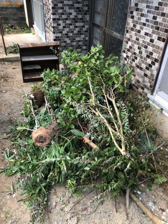 枝木、鉢植え、ラックの回収・処分ご依頼 お客様の声